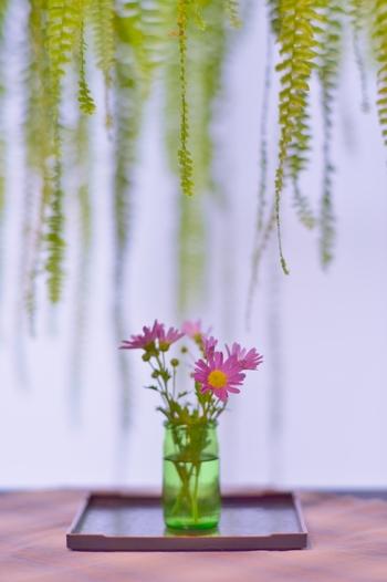 昔から縁起物や長寿の象徴とされている菊の花。