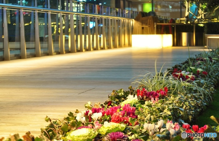 気持ち良い気候のこの季節だから。「夜散歩」が楽しい都内のスポット巡り