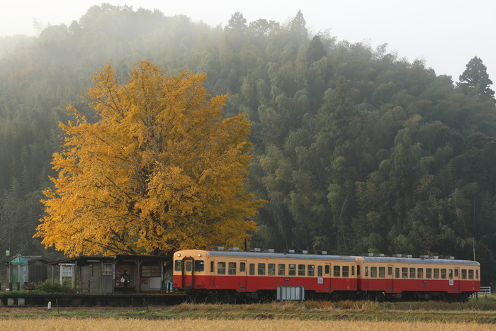 「秘境駅」とは、人が生活する集落から遠く離れた場所にひっそりと佇む静かな鉄道駅のことを指します。