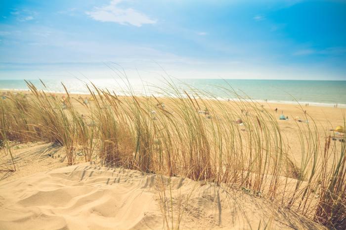 晴れ渡る空、青い海、心地良い潮風…夏のビーチは、夏らしさを思いっきり満喫できる特別な場所です。海へのドライブやお出かけが楽しい季節、海辺に似合うファッションや音楽で気分を盛り上げましょう♪