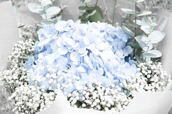シトシト、シトシト…。傘をさす日が多くなってきた今日この頃。梅雨入りし、紫陽花が美しく咲き誇る季節がやって来ました。そんな紫陽花をモチーフにしたゼリー「紫陽花ゼリー」が今インスタグラムなどのSNSで話題なんです。
