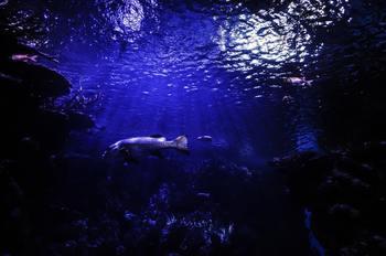 なんとも幻想的な夜の水族館。 動物園と同じく、夏場の夜に開園している水族館も少なくありません。 昼間とはまた違った演出で、刺激的な体験ができるかもしれません。