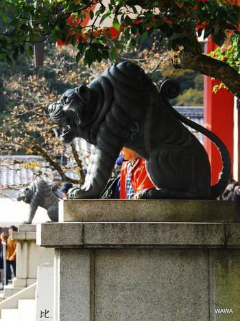 狛犬が「虎」であることにもご注目を。 この「虎」は、鞍馬寺のご本尊「毘沙門天」のお使いの「神獣」。  口を開いて物事の始まりを表す「阿(あ)」(写真手前)と、口を閉じて物事の終わりを意味する「吽(うん)」(写真奥)の2体の虎で、合わせて「阿吽(あうん)の虎」と呼ばれています。