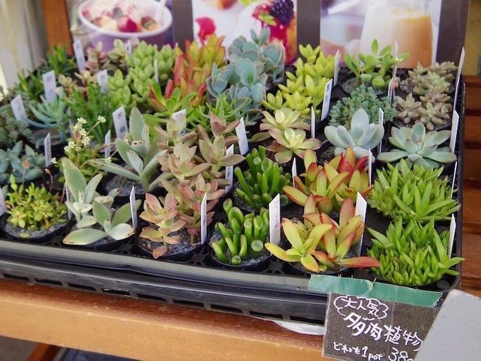 季節によって様々な切り花、人気の多肉植物や観葉植物などを、気軽に鑑賞&お買い物することができますよ。