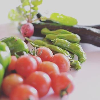 いかがでしたか?色鮮やかでみずみずしい『夏野菜』。今回の記事を参考に、旬の夏野菜をたっぷりと使った料理を作って、フレッシュな食感や味わいを堪能しましょう。