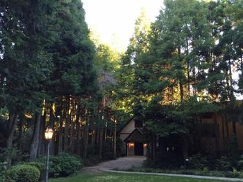 ホテルの中も緑が豊か。広々とした中庭にはチャペルがひっそりと佇んでいます。日曜日には礼拝もあるそう。森林浴をしながらお散歩するのもおすすめです。