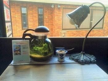 小さなテーブルには、小さな水槽が。