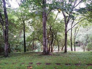 エントランスを抜けた先にあるピクチャレスク・ガーデン。ガーデンデザイナーであるポール・スミザーが設計した庭園です。絵本の森美術館を堪能したあとは、庭園でのんびりお散歩なんていかがでしょうか?