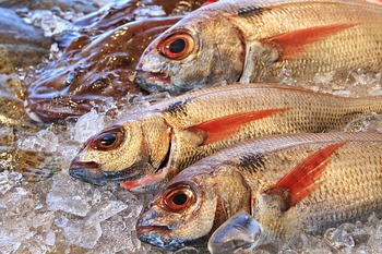 魚のヌメリや生臭さって気になりますよね。でも、炭酸水を使えばしっかりと落とすことができます!最後に流水で綺麗にすすぎ、洗い流しましょう。仕上がった魚の味は、ひと味違いますよ♪