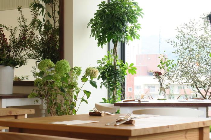 「Moliere Cafe(モリエール・カフェ)降っても晴れても」は、JR札幌駅前の六花亭札幌本店ビル9Fにあります。「ミシュランガイド北海道」で、三つ星を獲得しているレストラン「モリエール」がプロデュースするカフェ。  大きな窓から明るい日差しが差し込む店内は、グリーンが配されたウッディーでナチュラルな空間。心地良い、穏やかな空気が流れています。