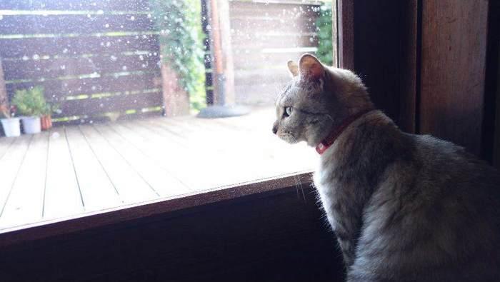 人気者の看板猫ちゃんも、訪れるお客様を迎えてくれますよ。