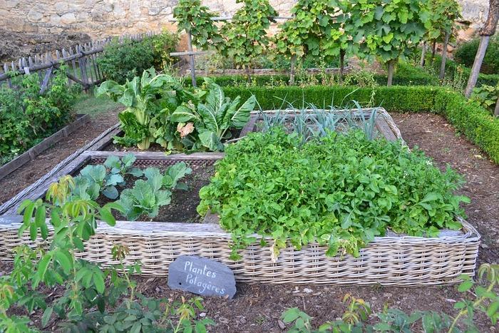 自分の手の届く範囲の土地に、花・ハーブ・野菜それぞれの  ・種を蒔くタイミング ・性質 ・収穫の時期  などを考えながら育てていきます。