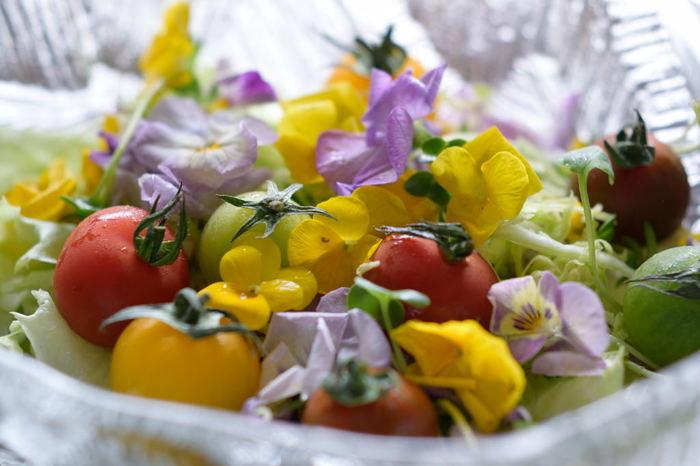 一緒に取れた野菜と新鮮なサラダはいかが?