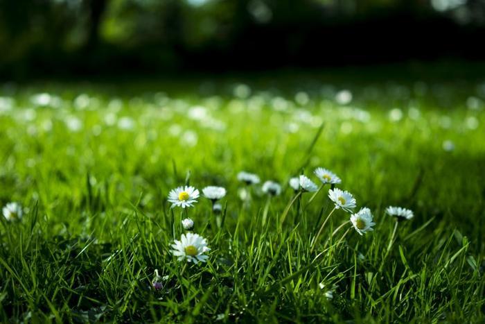 『Mamma Baby』は有機農法にこだわった、植物由来の成分を中心に作られています。自然を愛するその気持ちが、高品質な製品を生み出していくのです。