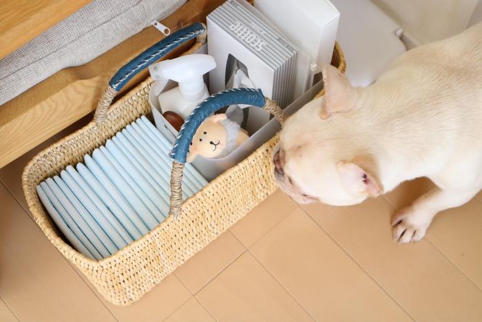 わが家の愛犬・ちくわのお手入れグッズも、「ワランワヤンのかごバッグ」にひとまとめにしてソファ横へ。 持ち手付きの『かごバッグ』なら、掃除の際も簡単に持ち運べて便利です♪
