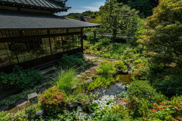 東慶寺は、ミシュラン・グリーンガイドの三ツ星(わざわざ訪れる価値がある)を獲得したことがあり、四季を通して境内の草花を楽しむことができます。