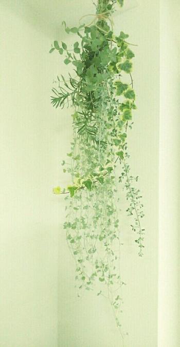 植物を束ねて作る『スワッグ』は、クリスマスの飾りとして知られていますが、植物の組み合わせ次第で、一年を通して楽しむことができます。作り方は、お好きなグリーンをバランスよく束ねて麻紐やリボンで結ぶだけ!このように長めのグリーンを使うと、存在感のあるスワッグに仕上がります。