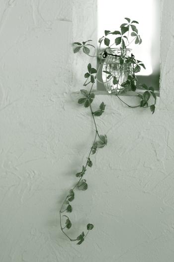 ガラスのフラワーベースに飾ったつる植物は、自然の動きに合わせて垂れ下がった様もまた素敵。つるの長さに合わせて、目線よりも高い位置に飾るのがポイントです。
