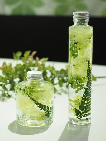 グリーンの濃淡が美しいハーバリウム。光を浴びてキラキラと輝く姿がとってもキレイ。同じグリーンでも、ボトルの形を変えるとまた違った雰囲気になりますね。