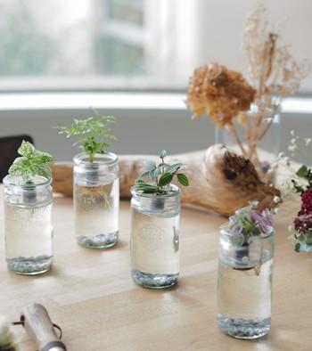 高さのあるグラスに小さめのグリーンを浮かばせて。水の割合が増えると涼しげな印象もアップしますね。光がキラキラと反射する窓辺に置くとキレイですね。