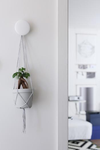 いろんな場所に飾りやすい、ミニサイズのプラントハンガーもおすすめ。小さなガジュマルがシンプルな白壁のアクセントになっています。