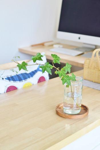 シンプルな空き瓶にアイビーを飾って。こんな風に一輪だけでも爽やかな雰囲気になりますね。キッチンカウンターやデスク周りのちょっとした空きスペースにおすすめです。