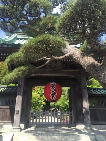 江ノ電・長谷駅より徒歩5分、鎌倉の西方極楽浄土と呼ばれる美しい境内の「長谷寺」。境内は上境内と下境内に分かれていて、上境内からは鎌倉の海や街を一望できます。