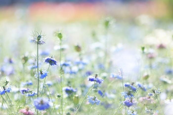 植物のある暮らしを楽しむなら、ハーブを植えてみるのはいかがでしょうか? 鉢ひとつからでも栽培でき、比較的育てやすいものが多いので、キッチンやベランダなどでも育てられます。さらに、育てる過程を楽しむだけじゃなく、その後も暮らしの中でさまざまに活用できるんです。