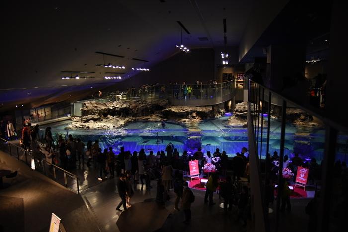 日中は観光客で賑わうすみだ水族館。こちら夜21時まで営業しており、夜は癒しスポットでまた違った表情を見せてくれるそう。館内の照明は、まるで夜が来るように、青い照明「ブルーナイトアクアリウム」という夜の時間がやってくるというから、一度体験してみたいですね。