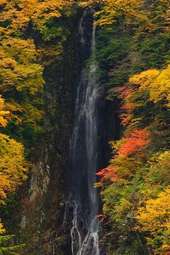 180メートルもの落差を誇る壮大な八滝は松川渓谷にある滝です。水量そのものはそれほど多くないものの、岩肌と渓谷をなでるように水が一気に流れ落ちる様は迫力満点です。