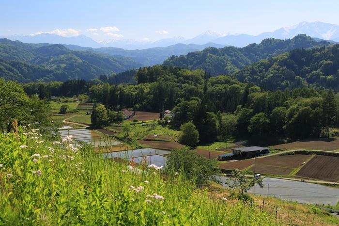 長野県北安曇郡白馬村と長野市に隣接する小川村は、人口約2500人の小さな村です。北アルプス麓に抱かれた小川村は景勝地の宝庫であり、村内に広がる風光明媚な景観は、「信州の自然百選」の一つに選ばれています。