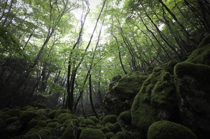 落葉樹の原生林が豊かに生い茂る高原の心地よい空気を肌で感じながら、緑のトンネルのような樹々の間から木漏れ日を浴び、ハイキングを楽しむのもおすすめです。