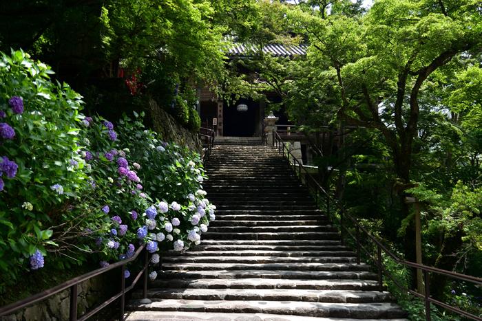 別名「花のお寺」とも呼ばれていて、四季折々の花が目を楽しませてくれます。特に、芍薬や牡丹、紫陽花の花が咲く季節はとても賑わいます。