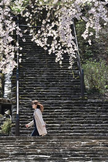 桜と石段のハーモニーも素敵です。