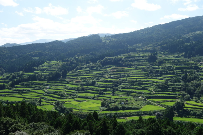 樫ノ川の西岸に位置する大石棚田では、日本の原風景が広がっています。山頂付近から、なだらかな傾斜沿いに延々と棚田が広がっている様は、私たちが想い描く「天空の郷」のイメージそのものです。