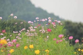 鮮やかなピンクやオレンジのブライトライトが薬萊山によく映えてとても綺麗です。