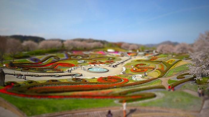 入口を通るとまず目に入る「彩の広場」では、季節ごとに違う花が咲き、訪れる時期によって全く違う彩で出迎えてくれます。
