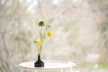 スウェーデンのデザイナー、クリスティーナ・スタルクの「BOTAN」。先の細い一輪挿しは、生けるのが簡単でしかも絵になります。まるでアートオブジェのようですね。