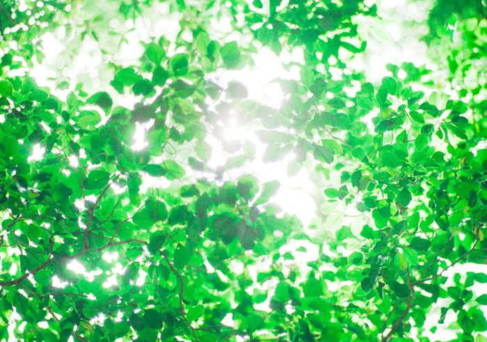 浮かび上がるのはこもれびそのもの。まるで木陰で涼んでいるような気分をうちわがもたらしてくれます。
