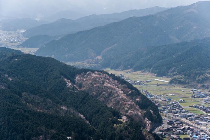 鳥取県南東部に位置する智頭町は、町の総面積のうち約93%が山林で占められている人口7000人ほどの小さな町です。