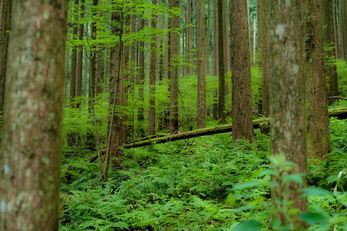 氷ノ山後山那岐山国定公園に指定されている那岐山の登山道には、豊かな森が広がっています。色鮮やかな緑に包まれて、森林浴を楽しみながら頂上を目指してみるのもおすすめです。