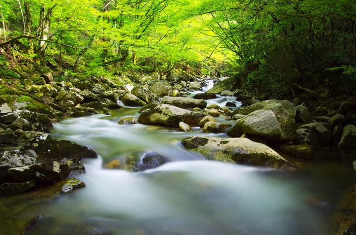 智頭町観光におけるハイライトとも言える芦津渓谷には、数々の渓谷、滝、淵、断崖が織りなす雄大な渓谷美が広がっています。