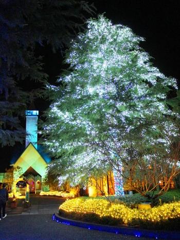 クリスマスシーズンに行きたくなります。