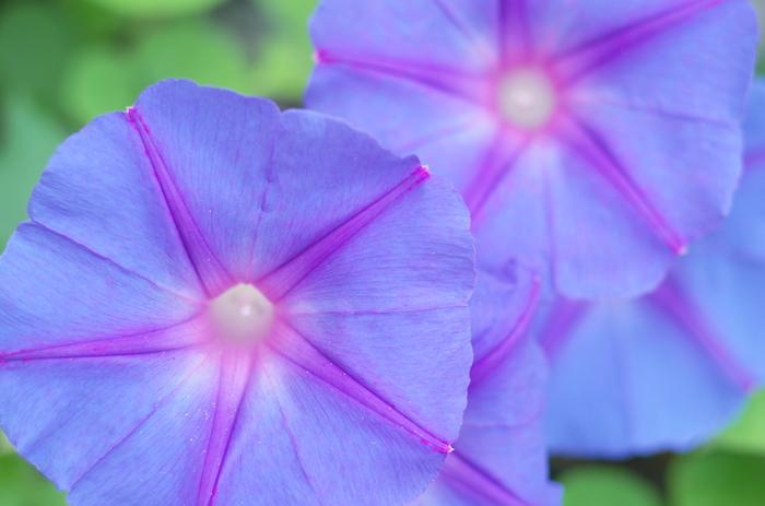 日本のデザインには季節を感じさせる柄が入っているのが特徴です。夏の風物詩や植物があしらわれたものを見てみましょう。
