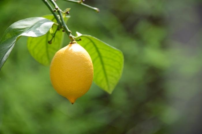 レモンは紅茶などに添えたり、揚げ物に添えたりする以外にも、便利な使い道や、さわやかなレシピがいっぱいあります。とくに調味料として、料理を美味しく引き立ててくれるので、休日にまとめて作り置きしておけば、翌週、大活躍してくれるかも。