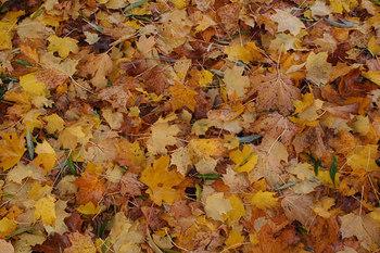 涼しくて快適な秋は、長距離を歩くのにオススメ!