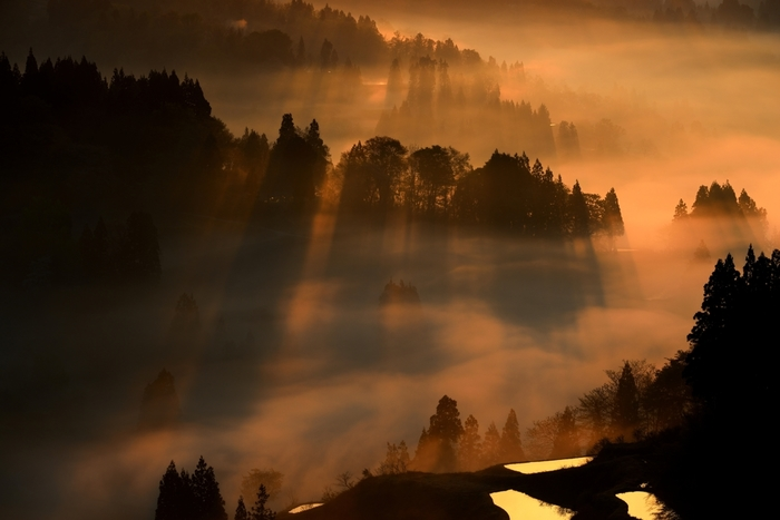 雲海に覆われ光の筋が輝く、星峠の棚田。