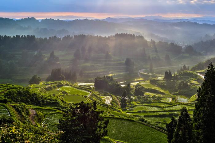6月下旬の日の出後。かすかに残る雲と光の筋、地上のどこまでも美しい緑が何とも言えず神々しい光景を展開しています。