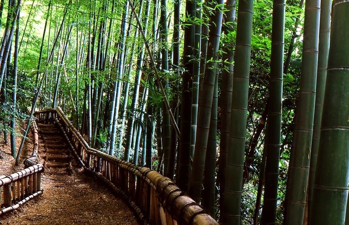 東久留米市にある竹林公園。新東京百景に選ばれているとともに、東京の名湧水57選にもなっている、東京でありながら自然の素晴らしいところです。