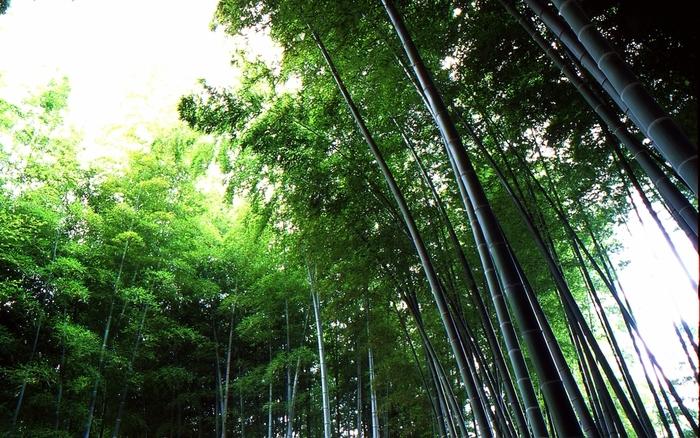 """竹林には緑の美しさとともに、笹の葉が揺れ動く時の""""音""""に癒しの効果があります。心のざわつきも、風にゆれる笹の音とともにどこかに吹き飛ばしてもらいましょう。"""